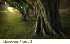 деревья4