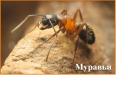 муравьи 3