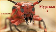 муравьи 5