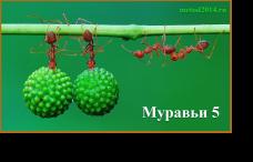 муравьи 5.4
